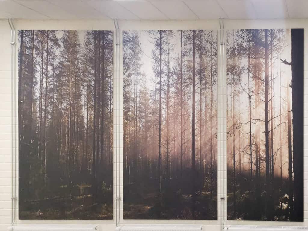 bedruckte Akustikplatte Wald-frontal